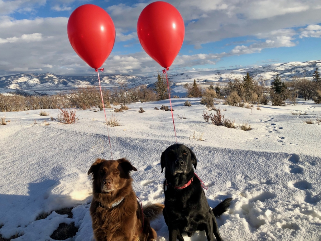 The canine interns celebrate 9 years with Redhead Marketing & PR